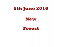 New Forest 5th June 16