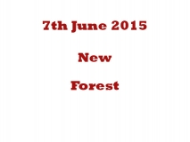 New forest 07-06-15